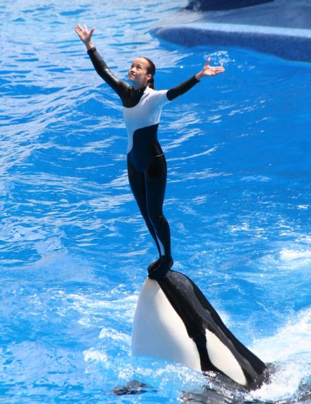 sea world orca whale